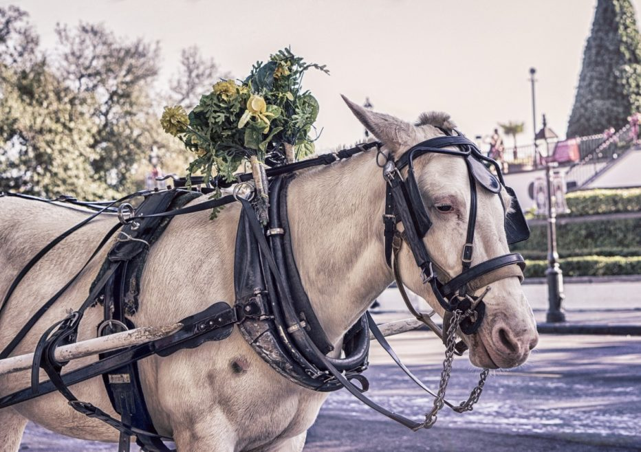 La calèche : un moyen de transport original pour les mariés
