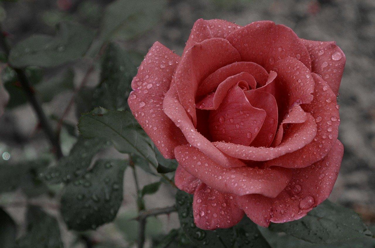 «Mariage pluvieux, mariage heureux» ou «mariage plus vieux, mariage heureux»? Quelle est la bonne expression?